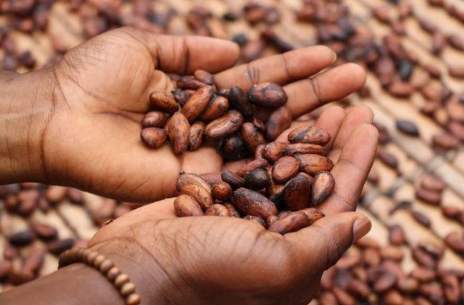 Odreagowanie notowań ropy naftowej po gwałtownej przecenie. Zapowiedzi deficytu na rynku kakao