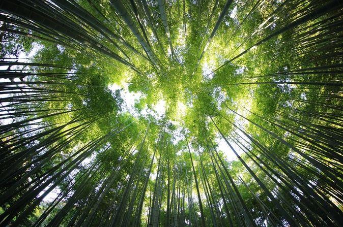 Prognozy 2021. Zielona gospodarka zacznie się rozpędzać