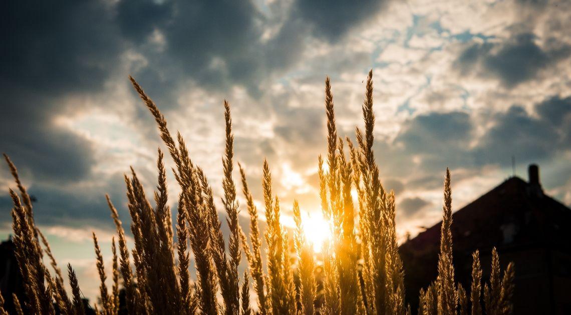 Sezonowość na rynkach surowcowych