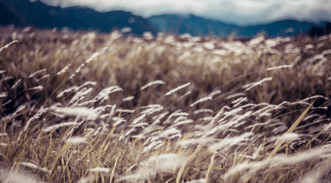 Towary rolne pod presją sprzedających. Cena pszenicy, soi oraz kukurydzy zniżkowała w ostatnich dniach