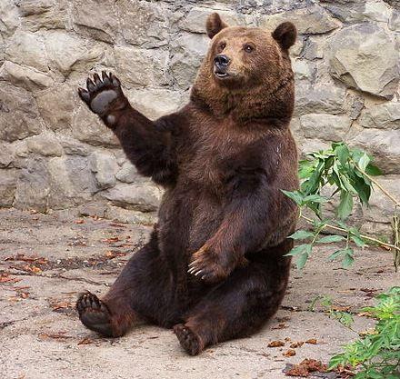 Wyraźne spadki na giełdowych indeksach, czy to powrót niedźwiedzi?