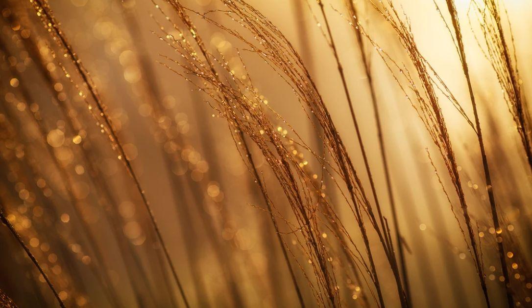 Złoto szykuje się do wybicia - tygodniowy przegląd rynków towarowych