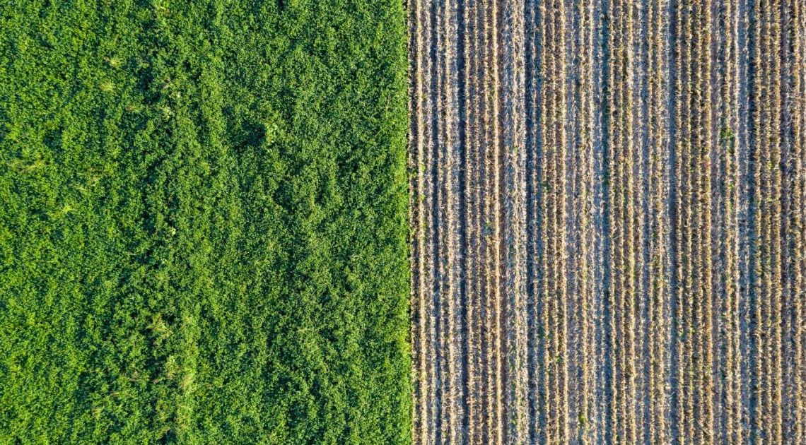 Biomasa. Zmiany na rynku biomasy. Biomasa co to? | FXMAG INWESTOR